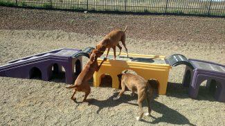 dog-playground